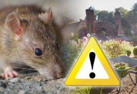 How Pests and Rodents Can Affect Your Health?