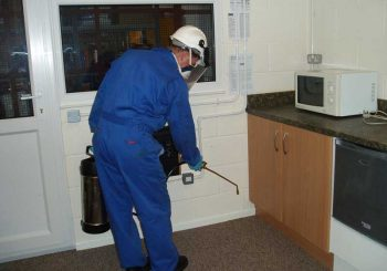 How to Get Rid of Pests from your home