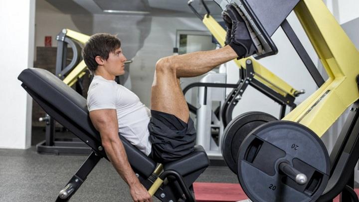 leg-press-muscle