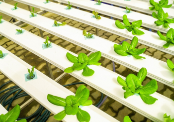 How to Keep Your Hydroponic Garden Cool This Summer
