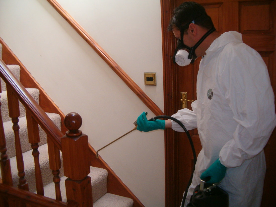 Tips for Keeping your Home Pest Free