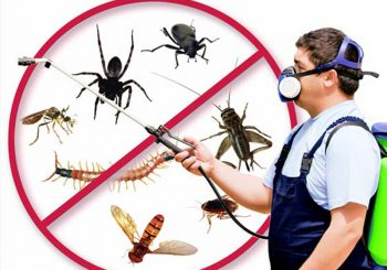 How to Find a Good Pest Control Company
