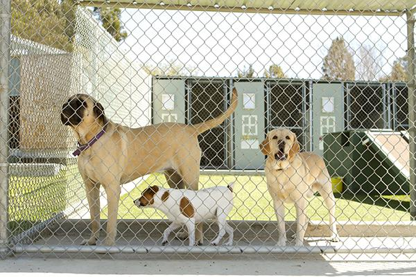 Best Boarding Kennel for Your Dog